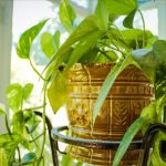 Toutes nos plantes d'intérieur